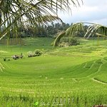 Ubud Good Travel