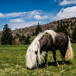 One of the ponies in Massie Gap