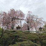 ภาพถ่ายของ วัดคิโยมิซุ