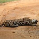 صورة فوتوغرافية لـ Yala Safaris - Private Tours