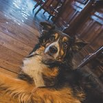 Our friendly pub dog: Gyp