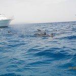 Sinai Excursions Φωτογραφία