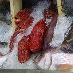 Pescado fresco de la LLotja