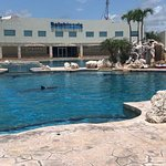 Photo of Dolphinaris Cancun