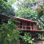 La Loma Jungle Lodge and Chocolate Farm Φωτογραφία