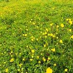 Hinchingbrooke Country Park Εικόνα