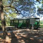 Billede af Charleston Tea Plantation