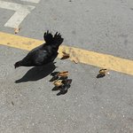 Chickens in road