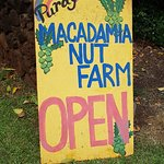 Purdy's All-Natural Macadamia Nut Farm의 사진