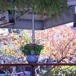 An autumn outlook from inside cosy Red Door cafe.