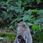 nurturing young one