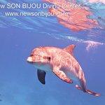 curious baby #dolphin #newsonbijou #Hurghada #Egypt #Travel #diving #scuba #RedSea