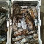 Pesce Fresco di Manfredonia