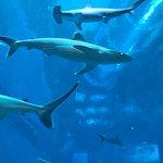 صورة فوتوغرافية لـ S.E.A. Aquarium