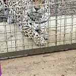 Feisty jaguar