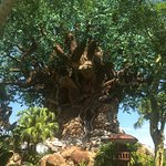 Photo de Disney's Animal Kingdom