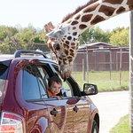 Photo de African Safari Wildlife Park
