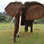 Landmines hurt animals too