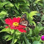 Foto de Andromeda Botanic Gardens