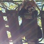 ภาพถ่ายของ Asahiyama Zoo