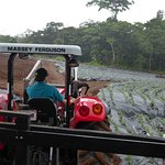 Tractor and Section of Farm With Pineapple Growing
