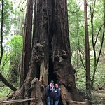 Foto de Muir Woods National Monument