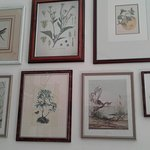 Nature pictures wall decorations