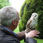 Gracie. the Barn Owl - love at first sight?