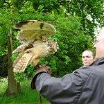 Winston, the Bengal Eagle Owl, a definite favourite.