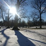 @Boston Commons Park