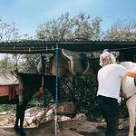 El Chorro Horse Riding
