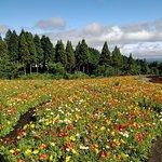 Kuju Flower Park Φωτογραφία