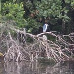 Bilde fra Pookot Lake