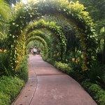 國家蘭花園照片