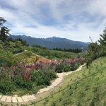 福寿山农场照片