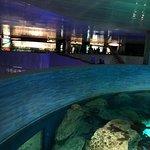 National Aquarium Resmi