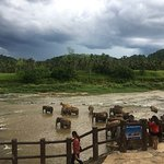 Foto de Pinnawala Elephant Orphanage