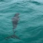 Foto de Wild About Dolphins