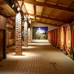 Wine cellar   Cantina storica della Venica & Venica