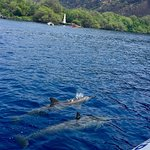 Photo of Dolphin Discoveries