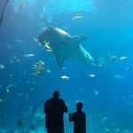 Photo de Georgia Aquarium