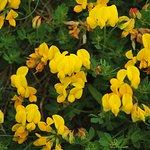 Lovely flora & fauna