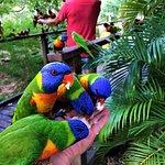 Фотография Bungalow Bay Koala Village Tours
