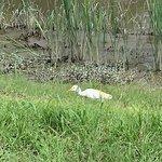 Foto de Savannah National Wildlife Refuge