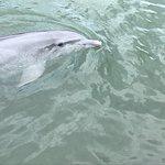 Foto de Dolphin Research Center