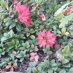 Botanical Garden of Siauliai University