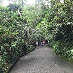 Photo de Sacred Monkey Forest Sanctuary