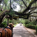 Southurn Rose Buggy Tours: Historic home