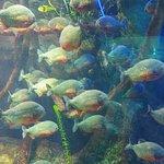 Aquarium of Genoa Φωτογραφία