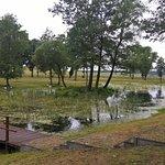 Zarośnięte jezioro